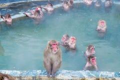 Schnee-Affe im Affe-Badekurort Stockbild