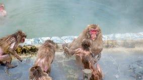 Schnee-Affe im Affe-Badekurort Stockfotografie