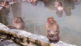 Schnee-Affe im Affe-Badekurort Stockfoto