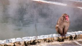 Schnee-Affe im Affe-Badekurort Stockfotos