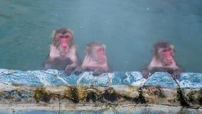 Schnee-Affe im Affe-Badekurort Lizenzfreie Stockfotografie