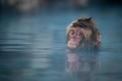 Schnee-Affe im Badekurort Stockbild