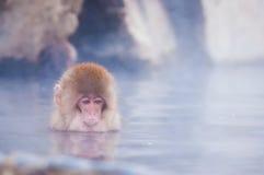 Schnee-Affe im Badekurort Stockfotografie