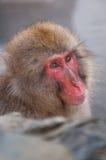 Schnee-Affe im Badekurort Lizenzfreie Stockfotos