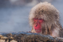 Schnee-Affe im Badekurort Lizenzfreie Stockfotografie