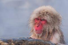 Schnee-Affe im Badekurort Stockfoto