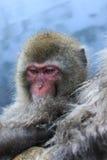 Schnee-Affe im onsen Stockfoto