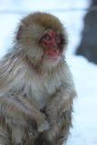 Schnee-Affe in Japan Lizenzfreies Stockbild