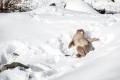Schnee-Affe an Jigokudani-Park Stockbilder
