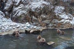 Schnee-Affe-Park, Yamanouchi, Japan Stockbilder