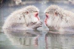 Schnee-Affe am Rand des Pools Onsen der heißen Quelle bei Jigoku Lizenzfreie Stockbilder
