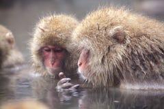 Schnee-Affe am Rand des Pools Onsen der heißen Quelle bei Jigoku Stockbild