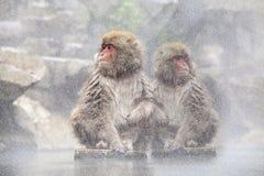 Schnee-Affe am Rand des Pools Onsen der heißen Quelle bei Jigoku Lizenzfreies Stockfoto