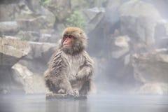Schnee-Affe am Rand des Pools Onsen der heißen Quelle bei Jigoku Stockfotografie