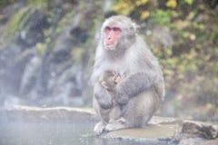 Schnee-Affe am Rand des Pools Onsen der heißen Quelle bei Jigoku Stockfoto