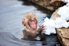 Schnee-Affen Lizenzfreie Stockfotografie