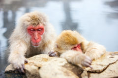 Schnee-Affen Stockfotos