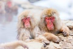 Schnee-Affen Lizenzfreies Stockbild