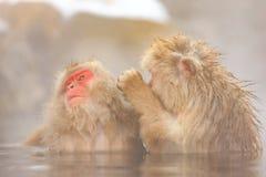Schnee-Affen im Jigokudani-Affe-Park, Nagano Lizenzfreies Stockfoto