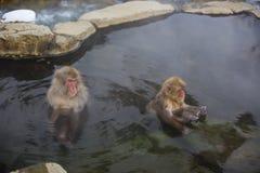 Schnee-Affen im Mineralpool Lizenzfreies Stockfoto
