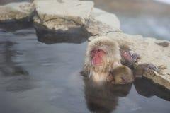Schnee-Affen: Krankenpflege-Baby in heiße Quellen Lizenzfreie Stockbilder