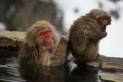 Schnee albert, der Makaken herum, der in der heißen Quelle, Präfektur Nagano, Japan badet Lizenzfreie Stockbilder