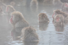 Schnee albert in einem natürlichen onsen (heiße Quelle) herum, gefunden in Jigokud Lizenzfreies Stockfoto