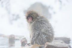 Schnee albert in einem natürlichen onsen (heiße Quelle) herum, gefunden in Jigokud Lizenzfreie Stockfotografie