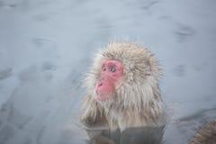 Schnee albert in einem natürlichen onsen (heiße Quelle) herum, gefunden in Jigokud Lizenzfreie Stockbilder