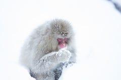 Schnee albert in einem natürlichen onsen (heiße Quelle) herum, gefunden in Jigokud Stockbild