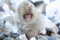 Schnee albert in einem natürlichen onsen (heiße Quelle) herum, gefunden in Jigokud Lizenzfreies Stockbild
