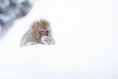 Schnee albert in einem natürlichen onsen (heiße Quelle) herum, gefunden in Jigokud Stockfotografie
