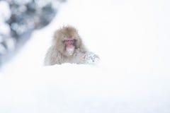 Schnee albert in einem natürlichen onsen (heiße Quelle) herum, gefunden in Jigokud Stockfoto