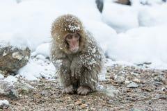 Schnee albert in einem natürlichen onsen (heiße Quelle) herum, gefunden in Jigokud Lizenzfreie Stockfotos