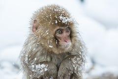 Schnee albert in einem natürlichen onsen (heiße Quelle) herum, gefunden in Jigokud Stockfotos