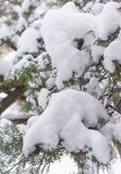 Schnee angehäuft auf Michigan-Winter-Immergrün Stockfotos