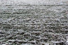 Schnee auf Ackerland Lizenzfreies Stockfoto