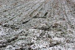 Schnee auf Ackerland Stockfotografie