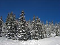 Schnee auf Bäumen stockbilder