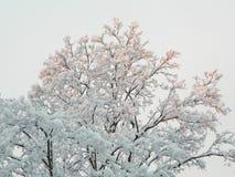 Schnee auf Bäumen lizenzfreie stockfotografie