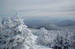 Schnee auf Bäumen Lizenzfreies Stockfoto