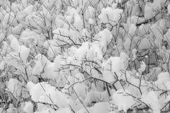 Schnee auf Büschen Stockbilder