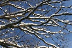 Schnee auf Baum Stockbild