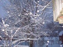 Schnee auf Baum Stockfotografie