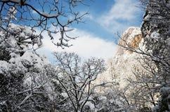 Schnee auf Baum, der blaue Himmel Stockfoto
