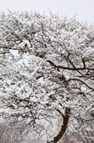Schnee auf Baum im Winter Stockbilder
