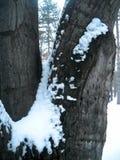 Schnee auf Baumast und Barke lizenzfreie stockfotos