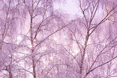 Schnee auf Birken nachts Lizenzfreie Stockfotografie