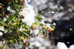 Schnee auf Blättern Stockfoto