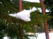 Schnee auf dem Baum stockfotos